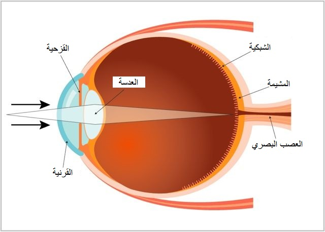 رسم بياني لمكونات العين